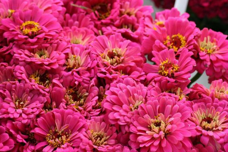 Farmers Market   © Swaminathan/Flickr