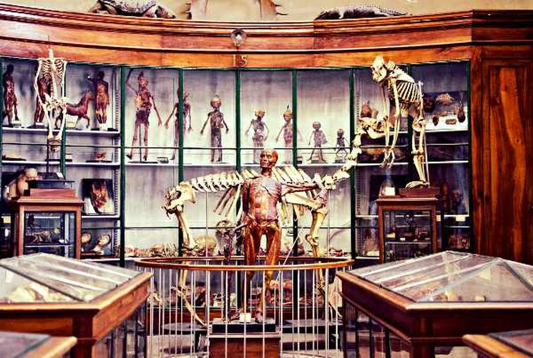 Musée d'Anatomie | © Vpe/WikiCommons