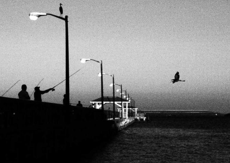 davis island pier