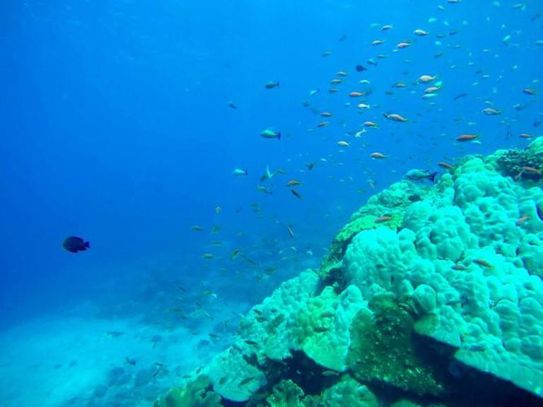 Scuba diving in Bali | © artsendofnowhere.co.uk