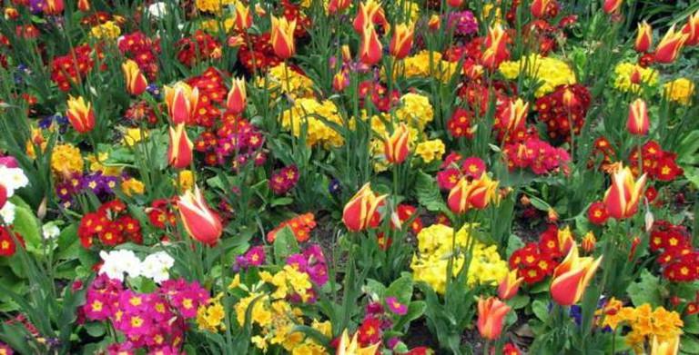 Flower Bed at Glasgow Botanic Gardens | © GMcLean/Flickr