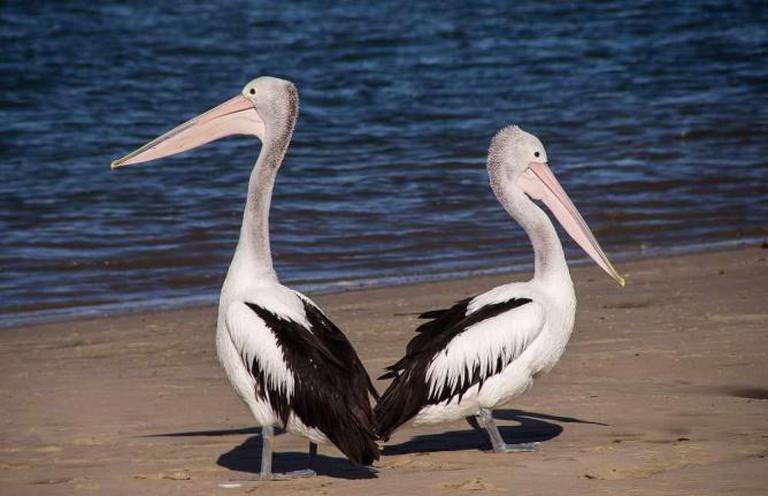 The Pelican Restaurant | (c) Sandid/Pixabay