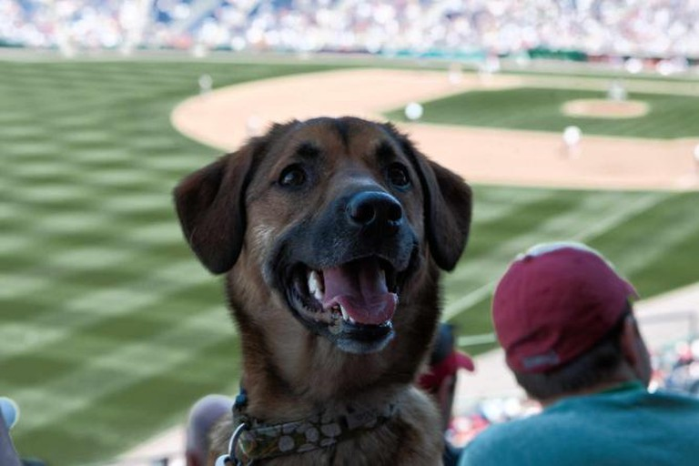 This dog is all smiles as he cheers on his favorite team