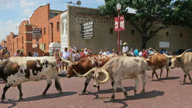 Longhorn cattle drive – Fort Worth Stockyards