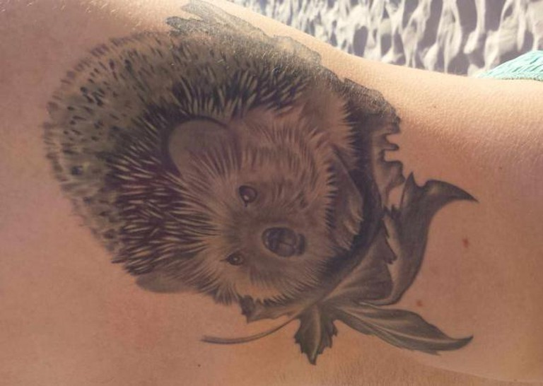 Hedgehog | © Ashley Silvern