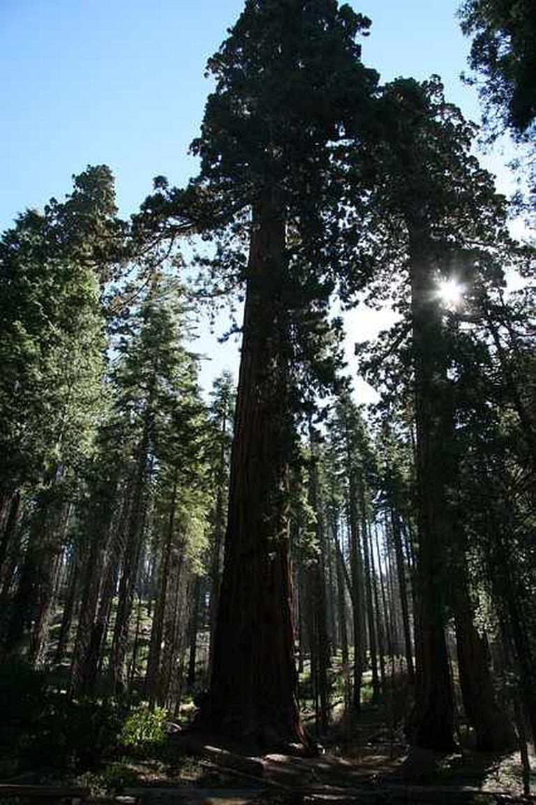 Redwood National Park | © Pixabay