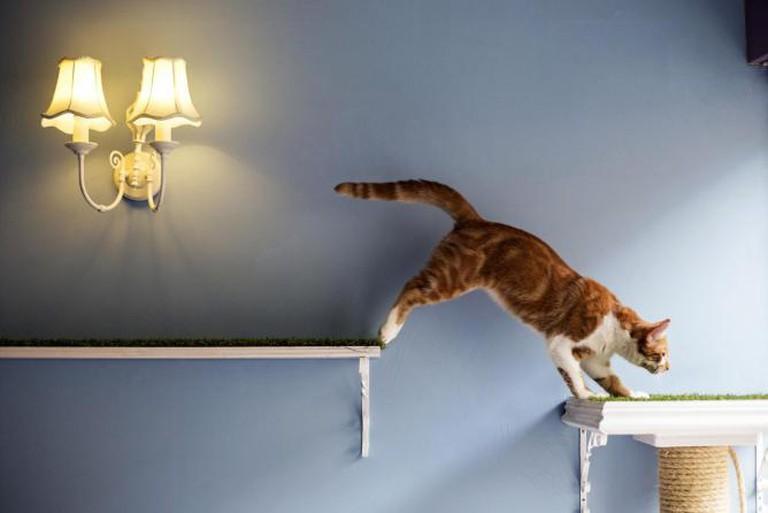 Feline Paradise | Courtesy of Lady Dinah's Cat Emporium