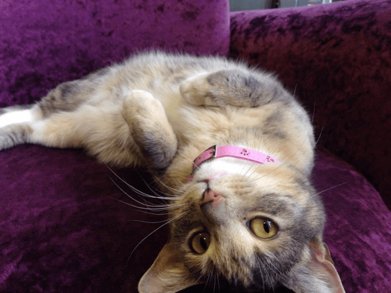 Relaxed And Happy | Courtesy of Kitty Café, Nottingham