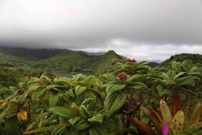 Flora at Freshwater Lake, Dominica