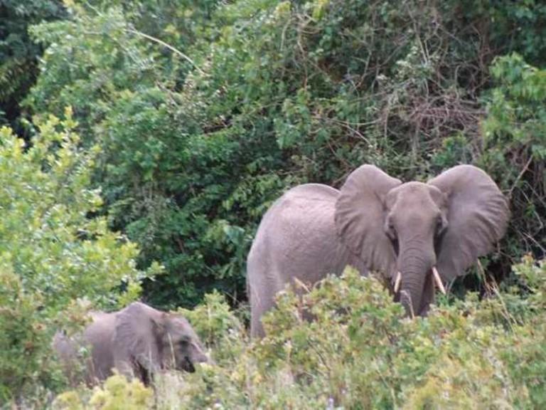 Elephants at Shimba