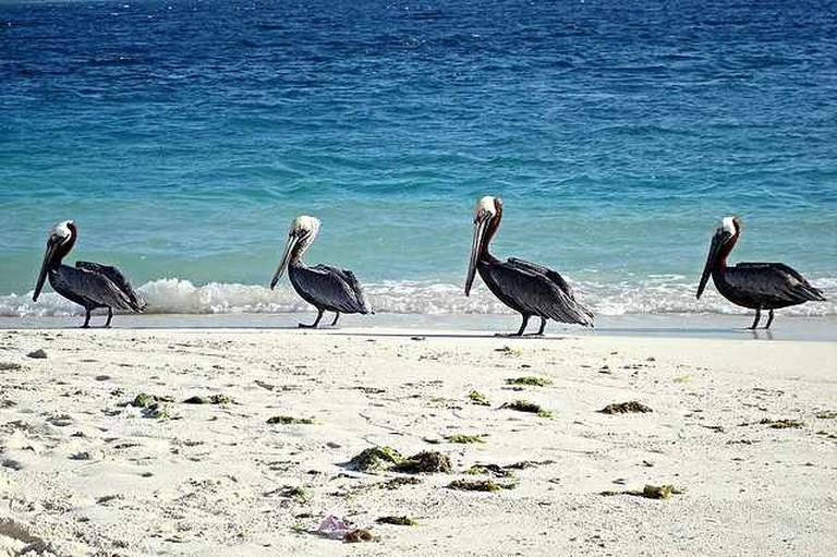 Pelicans at Parque Nacional Archipelago Los Roques