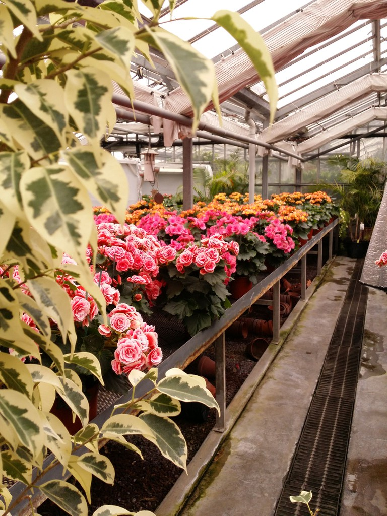 Inside greenhouse in Luxembourg Gardens | © WikiCommons