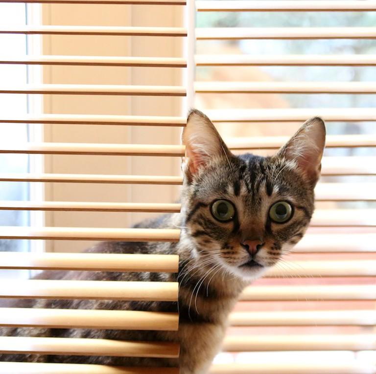 Hiding cat | © Jenny Downing / Flickr