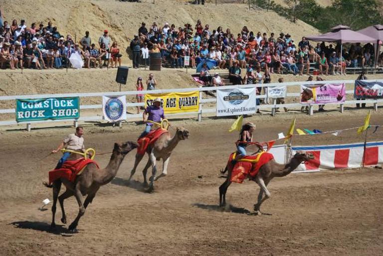 International Camel Racing