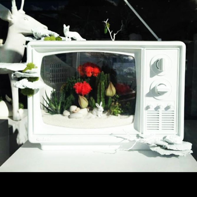 TV Terrarium by Paloma Teppa I Image Courtesy of Plant The Future