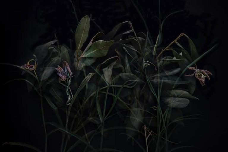 Not Dark Yet | © Tine Poppe