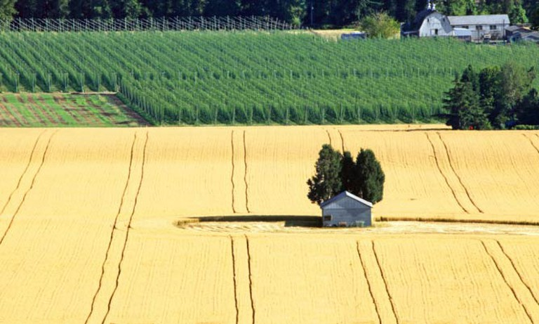 Hops and grains in Mount Angel, OR | © Ian Sane/Flickr