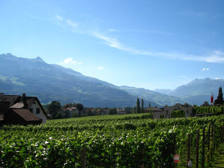 Vineyards near Vaduz (c) Andrew Bossi/Wikicommons