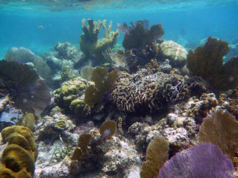 Belizian Barrier Reef | © Den Asuncioner / Flickr