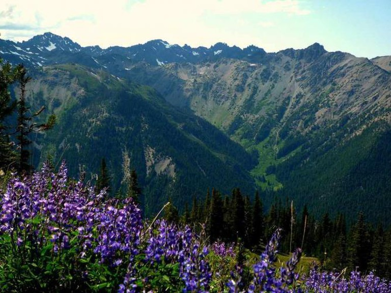 Marmot Pass, Olympic National Park | © Maurice King/Flickr