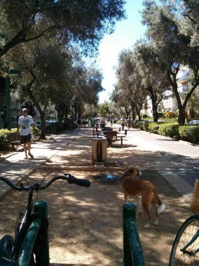 Ben Gurion Blvd Tel Aviv