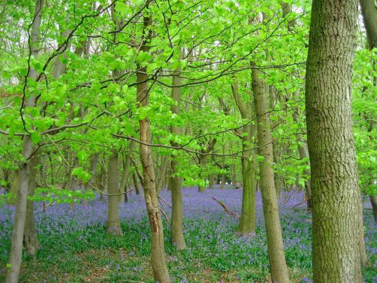 A Creative Commons Image: Wytham Woods | @lxsocon/Flickr