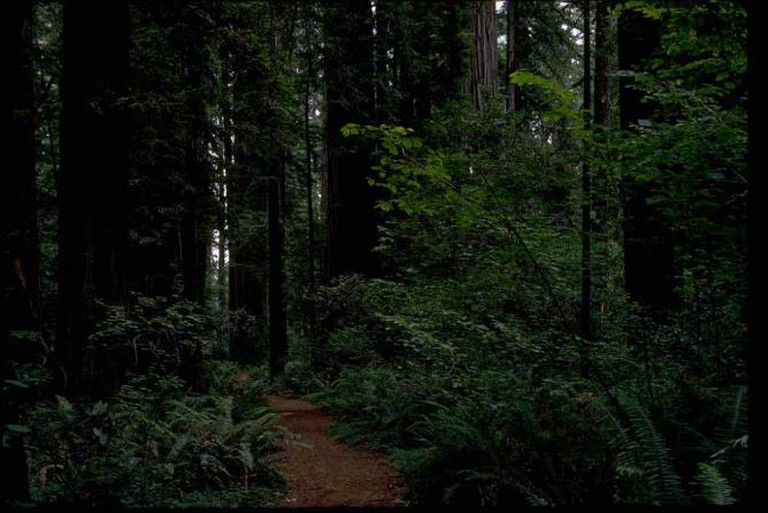 Redwood National & State Parks | © National Park Service/WikiCommons