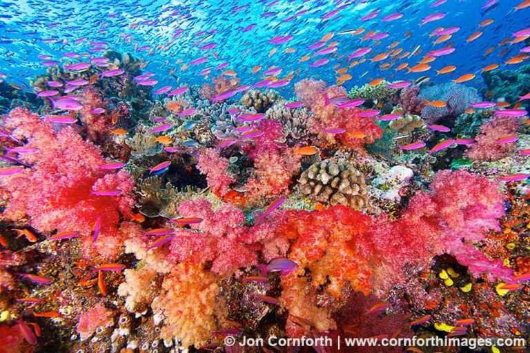 Namena Marine Park   © Jon Cornforth