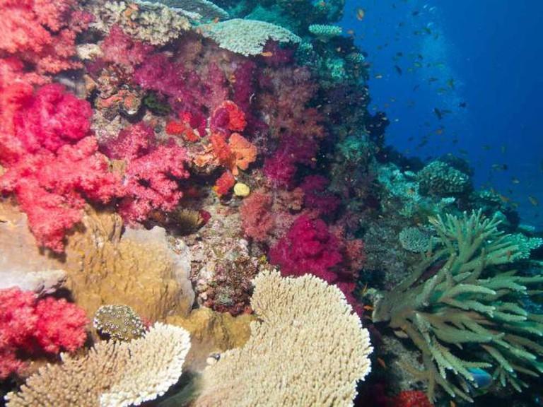 The Somosomo Strait   © Taveuni Palms Resort/ Flickr