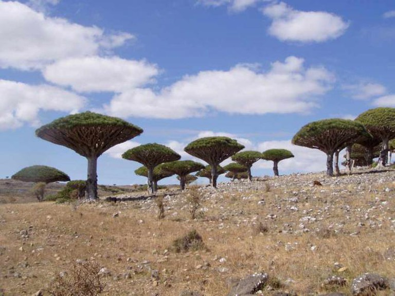 Socotra Dragon Trees | © Dan/Flickr