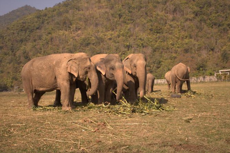 Elephants in Thailand | © Wing Yan Chan
