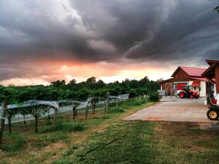 The 10 Most Beautiful Vineyards In North Carolina