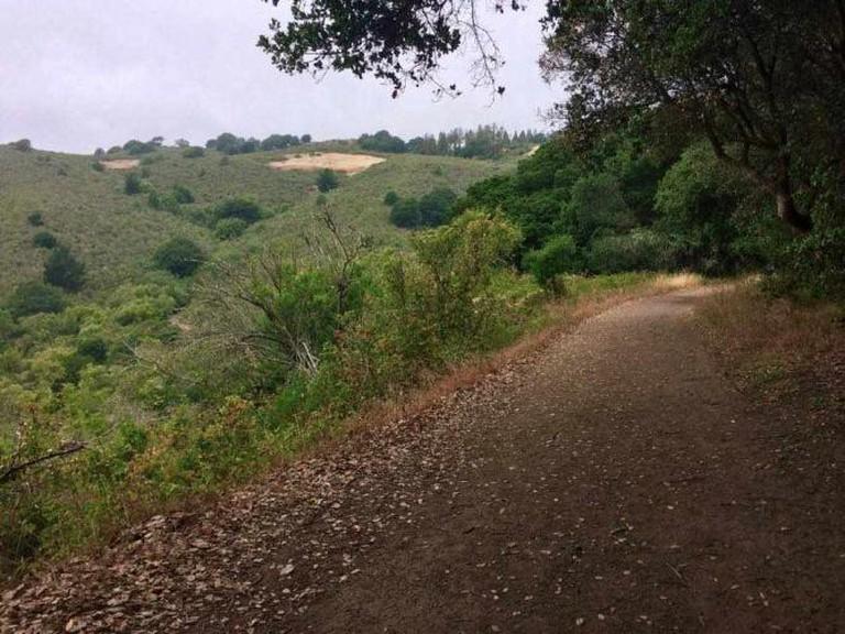 Hiking Trail   Tilden Regional Park