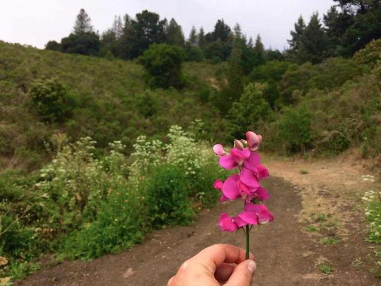 Flowers on Trail   Tilden Regional Park