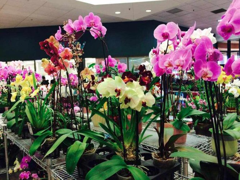Orchids for Sale | © Pacific East Mall