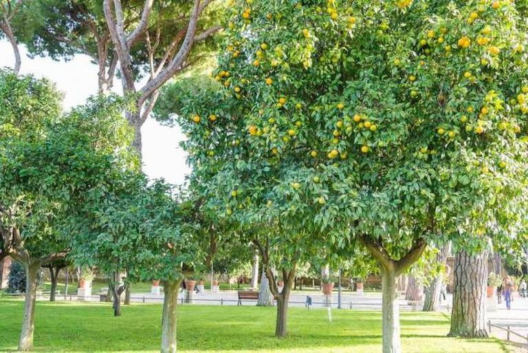 The Garden of Oranges