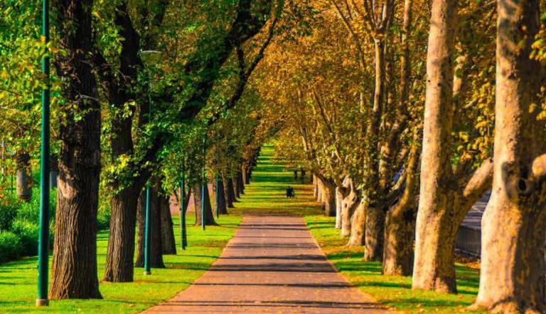 Avenue in Fitzroy Gardens © Petra/Flickr