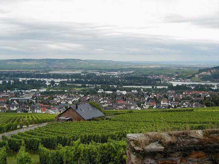 Rüdesheim's vineyards  I © Roger W/Flickr
