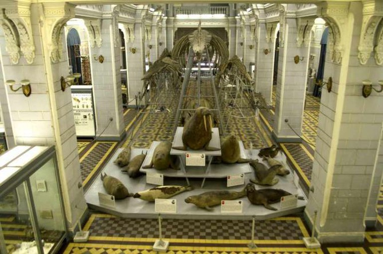 An exhibit in the Petersburg Zoological Museum | Courtesy of Stefan Hunt