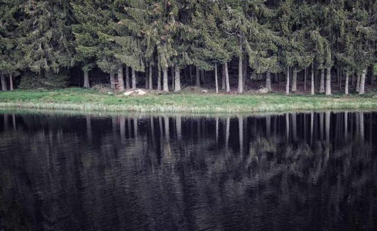 Black Forest | © CarloScherer/Flickr