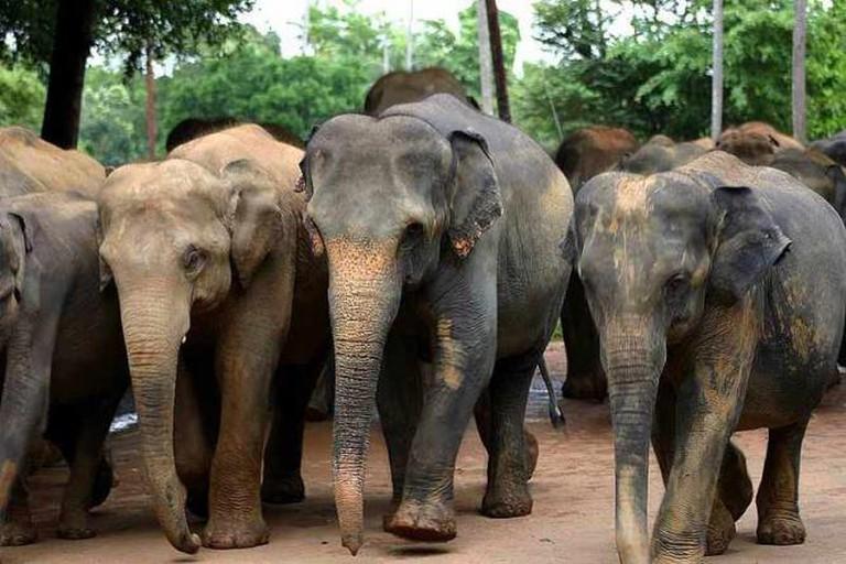 Herds of elephants