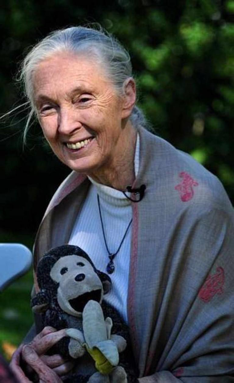 Jane Goodall | © Nick Step/Flickr