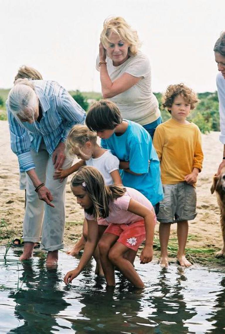 Jane Goodall teaching at Martha's Vineyard, 2006 | © William Waterway/Wikicommons