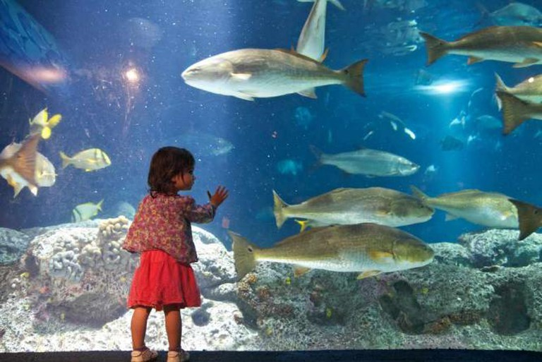 South Carolina Aquarium | © Harry Alverson