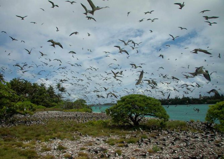 A bird nesting site on Palmyra Island   © Island Conservation/ Flickr