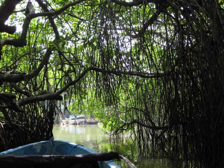 Mangrove tunnel | © shankar s. /Flickr