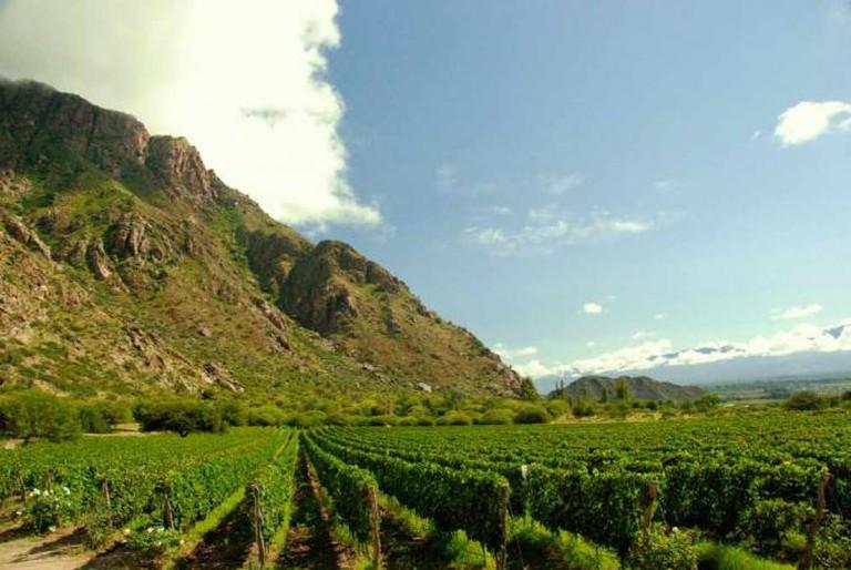 A winery near Salta Ⓒ Jlla00/WikiCommons
