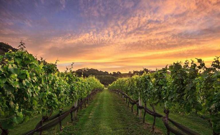 Vineyard Sunset | © Chris Gin/Flickr