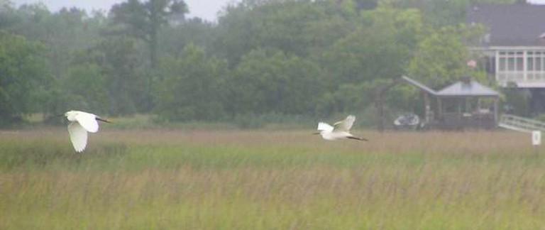 White Egrets, Charleston | © Henry de Saussure Copeland/Flickr