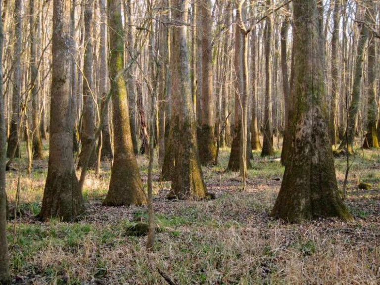 Congaree National Park   © Miguel Vieira/Flickr